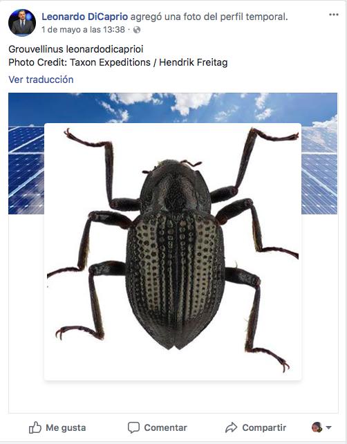 Escarabajo Di Caprio