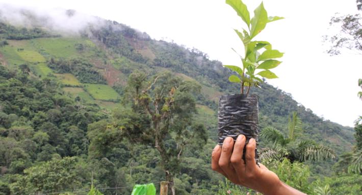 Noé es uno de los pocos jóvenes caficultores que tienen esperanza en el futuro y en que se puede recuperar el café. Cree que la unión de agricultores y convencerlos de migrar al café, aunque sea lentamente, puede ser la solución. Foto: Vanessa Romo.