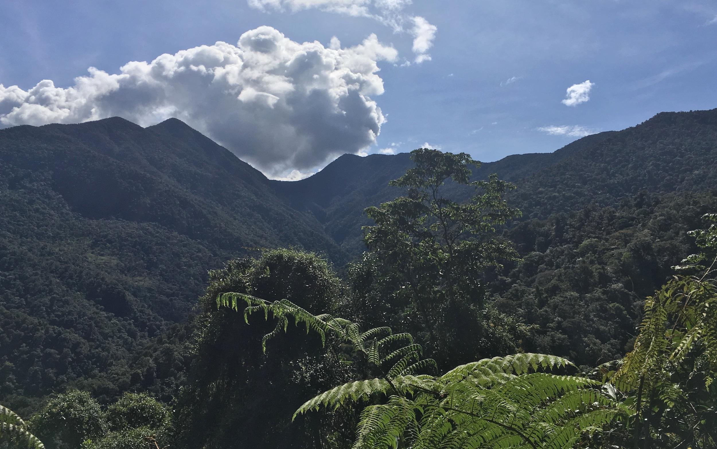 El Parque Nacional Natural Las Orquídeas, en el departamento de Antioquia, región donde se observó más aves en Colombia. Foto: Diego Calderón.