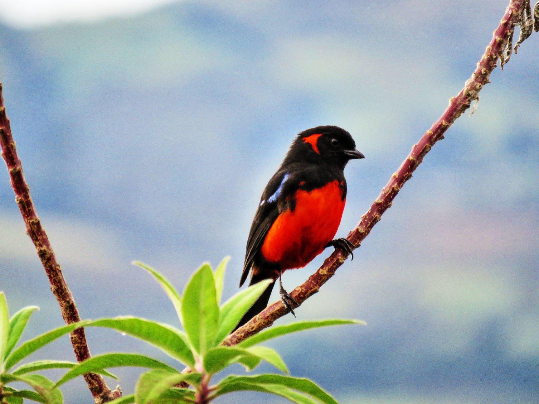 Celendín, en Cajamarca, fue uno de los lugares que recorrieron los observadores de aves peruanos. Foto: Aves del Perú.