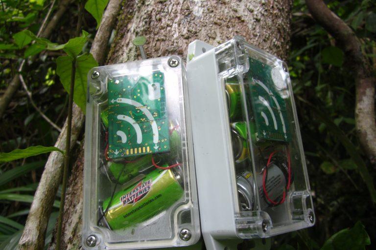 En Belice se han colocado AudioMoths en pares, uno para detectar disparos y el otro para grabar continuamente. Foto: Universidad de Southampton.