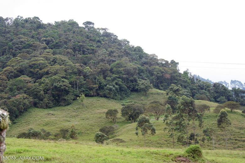Colombia: Un fragmento de bosque en el Santuario Otún Quimbaya, en el flanco occidental de la Cordillera Central, en el departamento de Risaralda. Foto: Rhett A. Butler