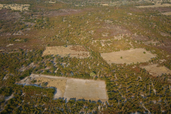 AFRICA Botswana - Deforestation on the edge of the Okavango delta