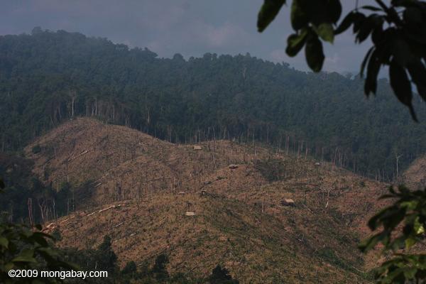 Malasia: el avance de la deforestación en la selva de Sabah, debido a la tala. Foto: Rhett A. Butler