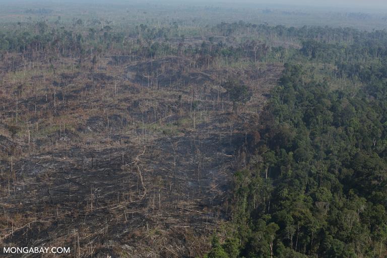 Indonesia: quema de bosque dentro del Parque Nacional Tesso Nilo en Sumatra. Foto: Rhett A. Butler