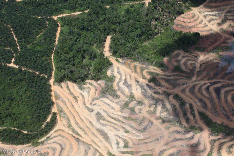Malasia: extraños patrones de deforestación en Borneo. Foto: Rhett A. Butler