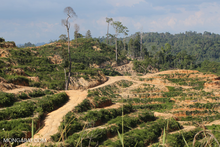 Malasia: la deforestación carcome el bosque de Sarawak. Foto: Rhett A. Butler