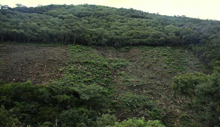 Deforestación de bosques a causa de la agricultura a pequeña escala en los valles . Las propiedades pequeñas y las comunitarias registraron la mayor superficie deforestada en el país entre 2012 y 2016. Foto: Eduardo Franco Berton