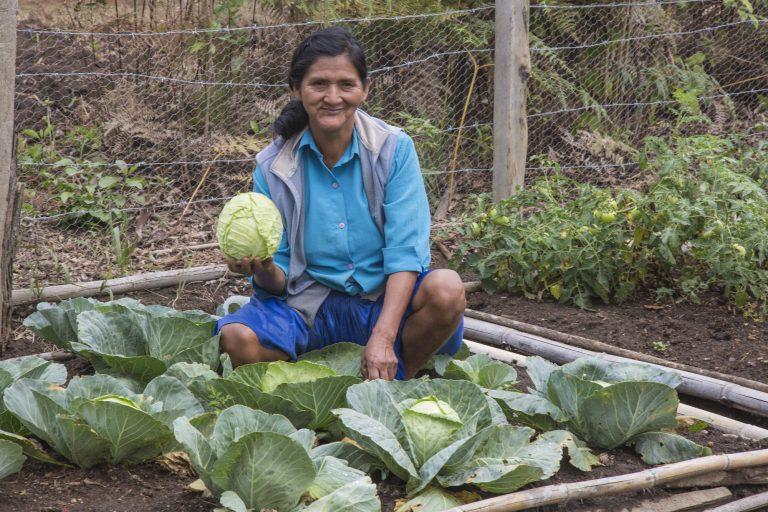 Los patios o huertos son pequeñas unidades de manejo agrícola ubicados en las proximidad de la vivienda. Foto: WCS Bolivia.
