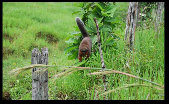 El bosque donde habita el mono tití del Caquetá se encuentra bastante fragmentado, lo que dificulta su supervivencia. Foto: Javier García, Fundación Herencia Natural.