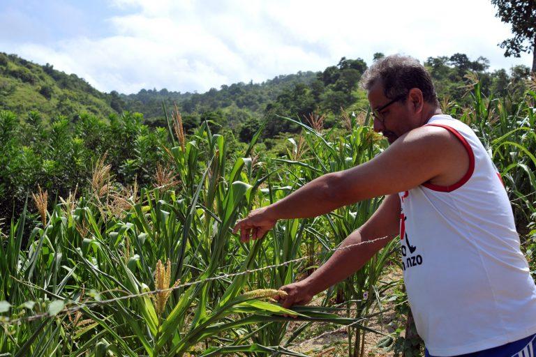 Eduardo Mendoza, vicepresidente de la Junta Parroquial Las Piñas, dijo que los cultivos de maíz se han visto afectados por los cambios climáticos en la zona de influencia de la planicie de la Refinería. Foto: Génesis Lozano.
