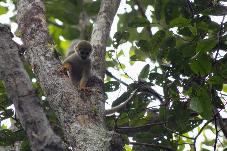 El Proyecto Providence busca monitorear la biodiversidad de toda la Amazonía sudamericana. Foto: Proyecto Providence.
