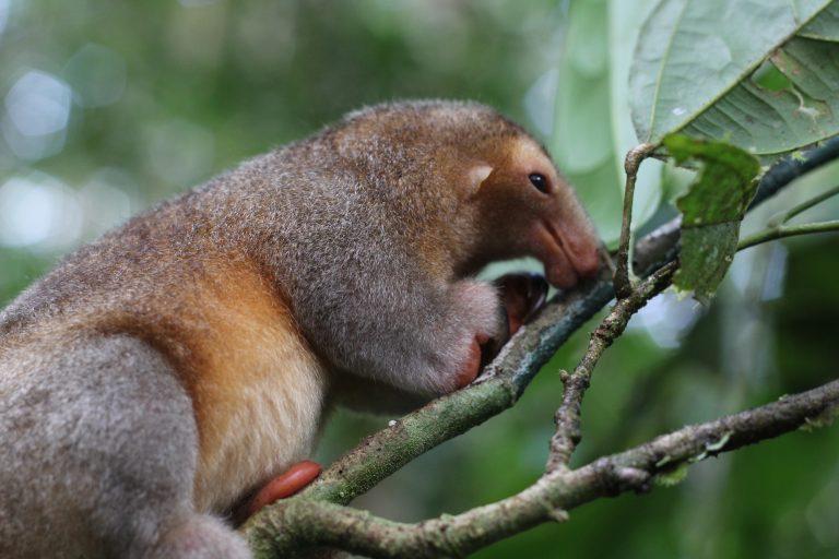 El Proyecto Providence analiza, en tiempo real, imágenes y sonidos de la biodiversidad Amazónica. Fuente: Proyecto Providence.