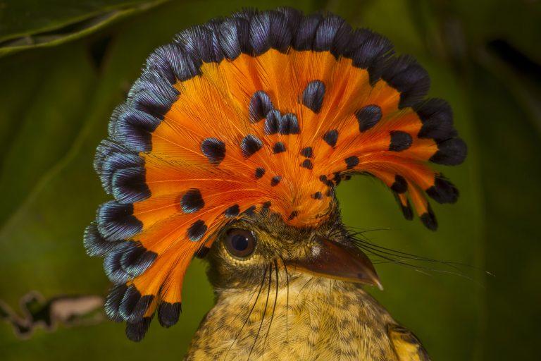 El Parque Nacional Madidi alberga el 9 % de especies de aves de todo el mundo. Foto: WCS.