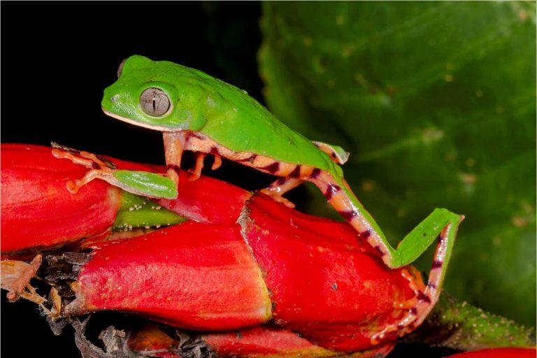El Parque Nacional Madidi se extiende sobre 18 957.5 kilómetros cuadrados de hábitats muy diferentes. Foto: WCS.