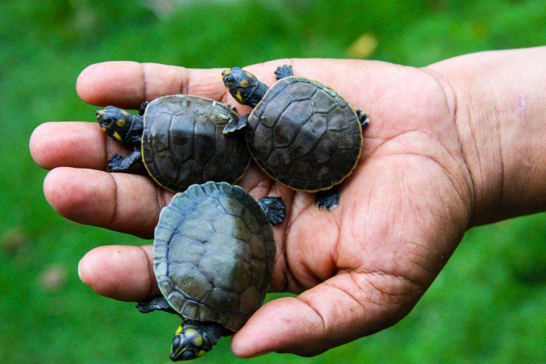 La Orinoquía colombiana es cuna de una gran biodiversidad. Foto: Fundación Cunaguaro.