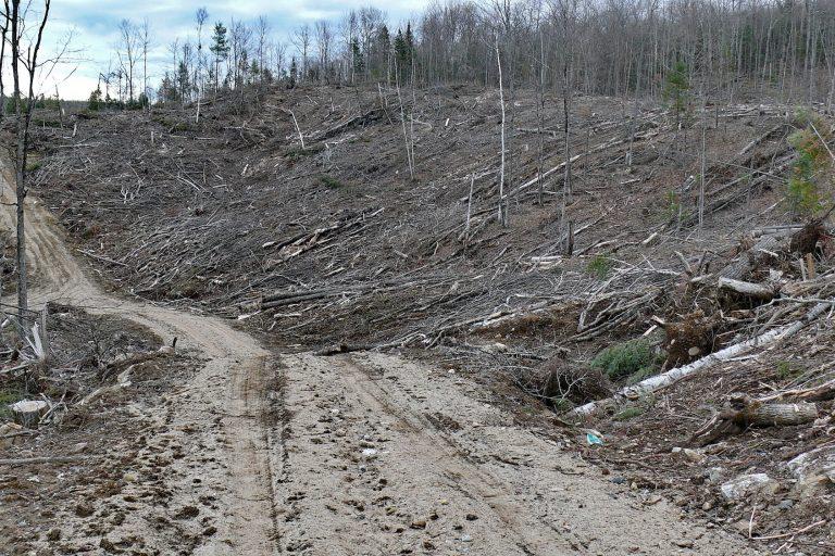 Los suelos son arrasados en todo el continente. En la imagen, un bosque destruido en Québec, Canadá. Foto: Shutterstock / IPBES