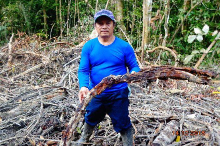 Darwin Rodríguez muestra una mata de yagé que fue destruida por la obra de PetroAmazonas y Amerisur. 14 de diciembre 2015. Foto: Alonso Aguinda.