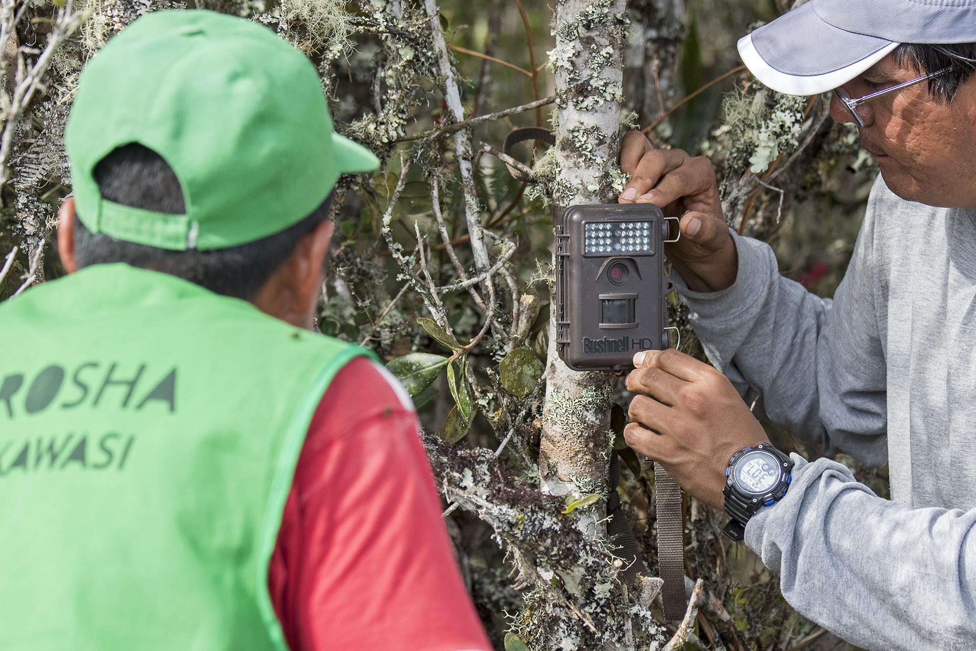Seis cámaras trampa han sido instaladas en el territorio de la región Amazonas donde habitan los ojos de anteojos. Foto: Michael Tweddle.