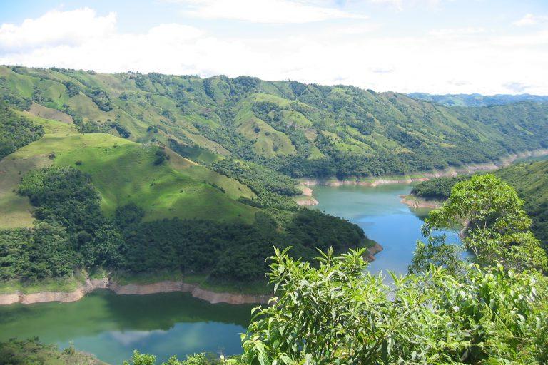 Bosque nativo alrededor de Hidromiel en el departamento de Caldas. Foto: Guillermo Rico.