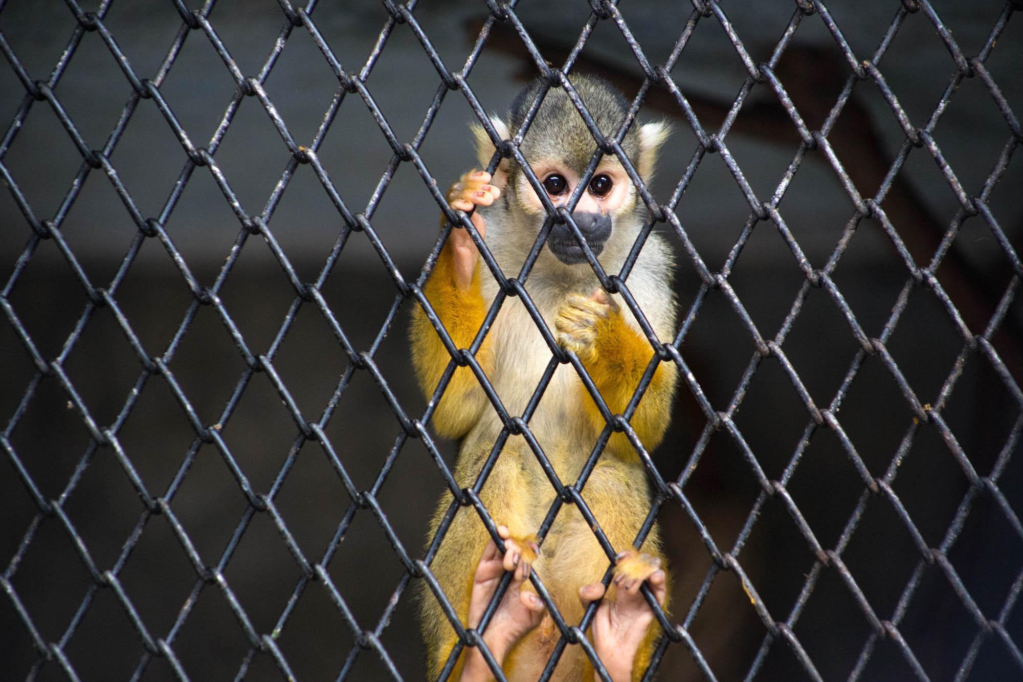 Nuevas rutas y modalidades del tráfico de fauna silvestre en el Perú