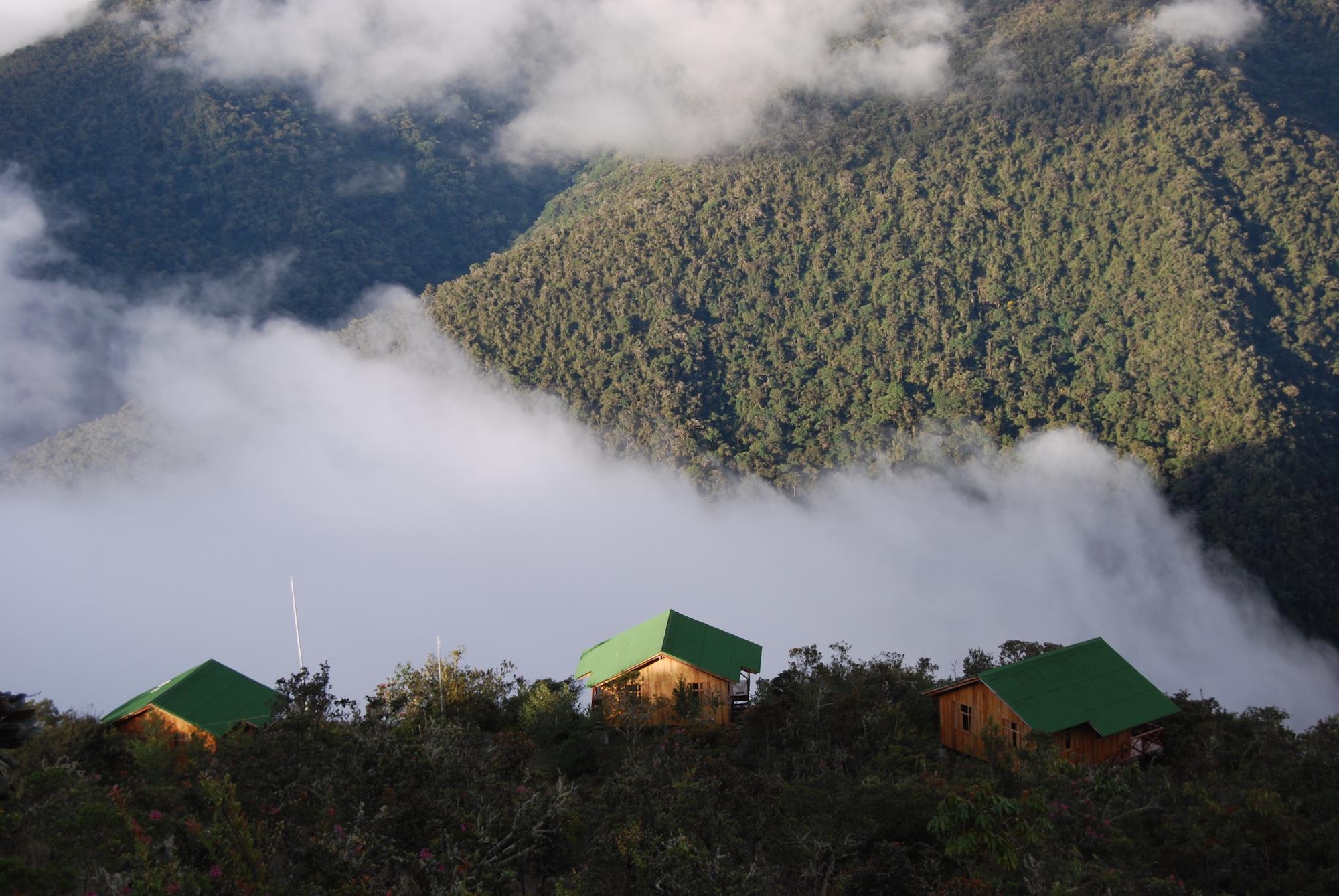 Los bosque nublados tienen la particularidad de no ser muy altos porque se ubican en zonas de montaña. Foto: Conservación Amazónica.
