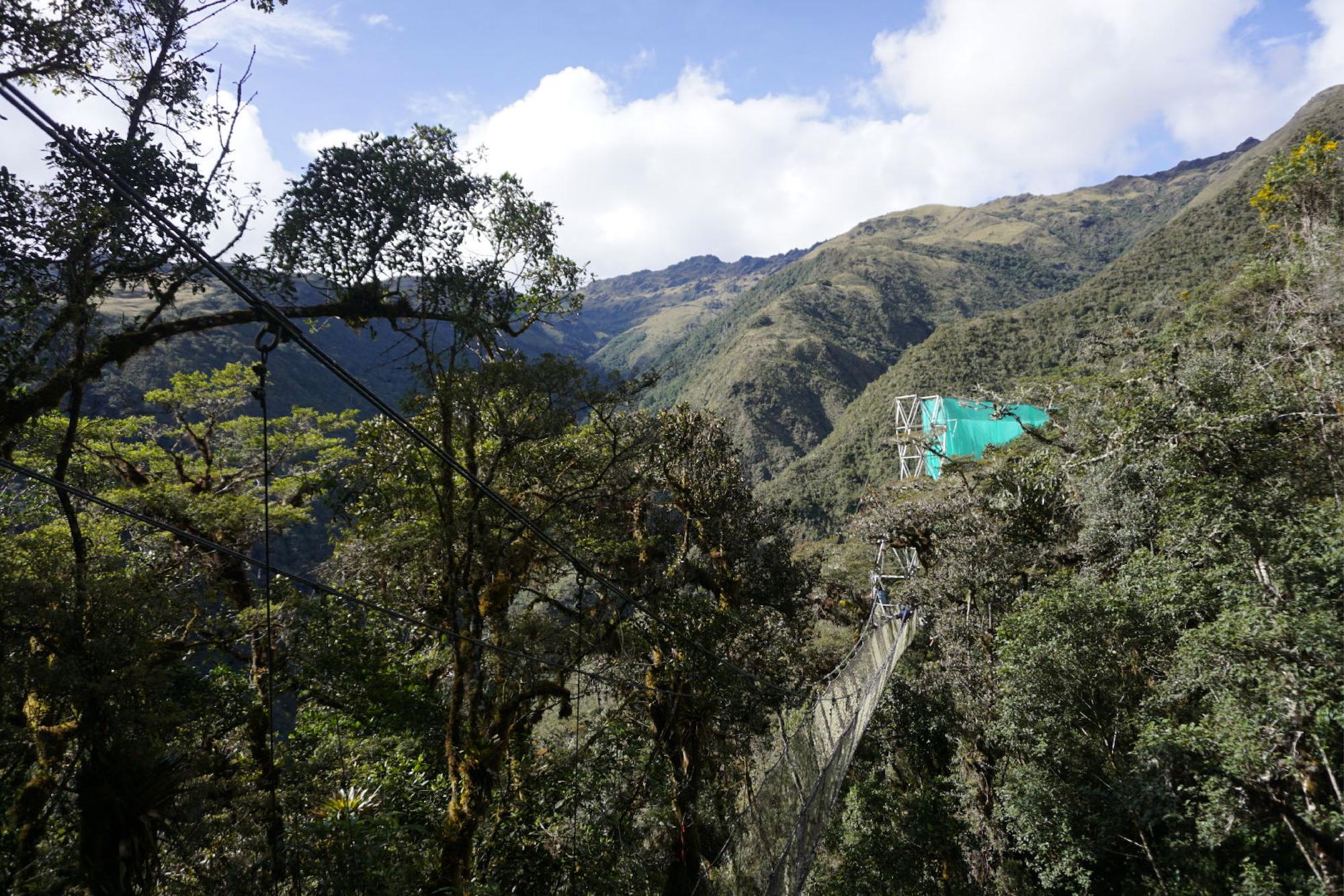 Para el experimento se ha instalado gigantescas mallas de 40 metros de alto que rodean una extensión de 30 por 30 metros del bosque nublado. Foto: Daniel Setiawan.