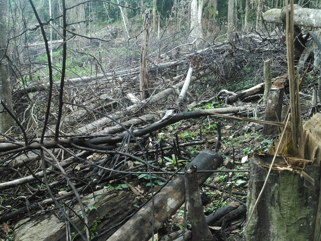 Deforestación por incendio provocado en la Sierra de Aroa. Foto: Delvis Romero.