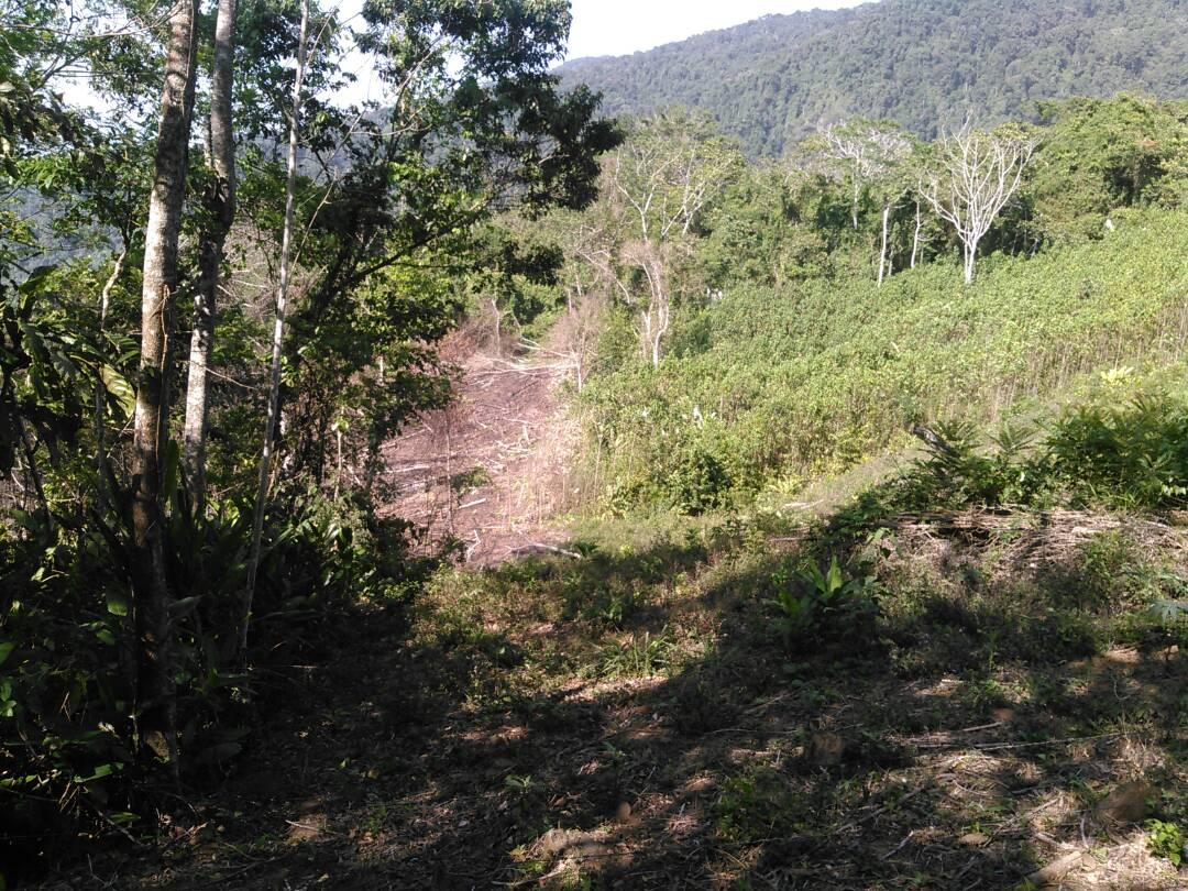 Montañas deforestadas en la Sierra de Aroa. Foto: Delvis Romero.