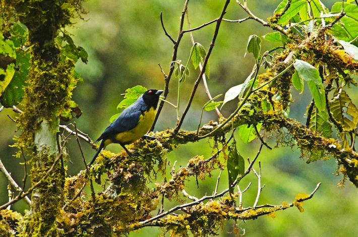Según el Sernanp, el Parque Nacional Río Abiseo alberga alrededor de 409 especies de aves. Foto: Christian Quispe-Sernanp