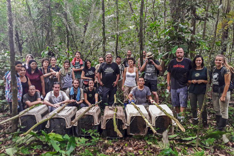 Todo listo para que seis maquisapas sean puestos en libertad en la Reserva Nacional Tambopata. Foto: Raúl Bello / Kawsay Biological Station.