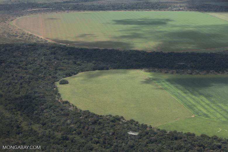 Amazonía de Brasil: Los campos de soya van avanzando en la Amazonía sur de Brasil. Foto: Rhett A. Butler