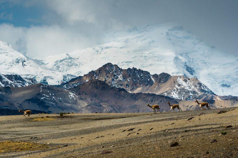 Los denuncios mineros se encuentran en territorio de la comunidad campesina Phinaya y sobre la masa glaciar del nevado Quelccaya. Foto: Conservación Amazónica.
