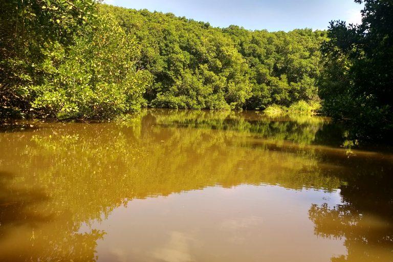 Manglares en la Vía Parque Isla de Salamanca. Foto: Vía Parque Isla de Salamanca.