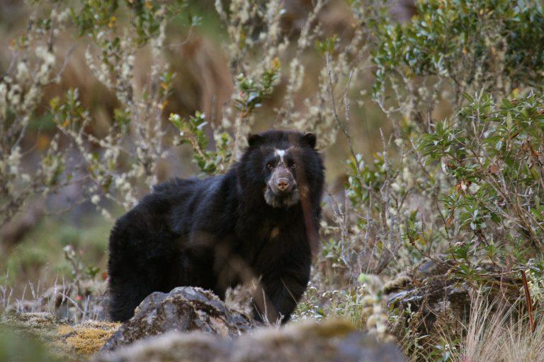 Se calcula que más de 8000 especies, entre flora y fauna, albergaba el Parque Nacional Madidi. Foto: WCS.