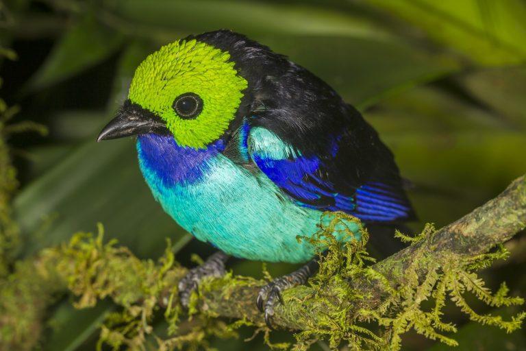 Las cifras de especies registradas en estas expediciones han demostrado que Madidi ocupa el primer lugar en cuanto aves. Foto: WCS.