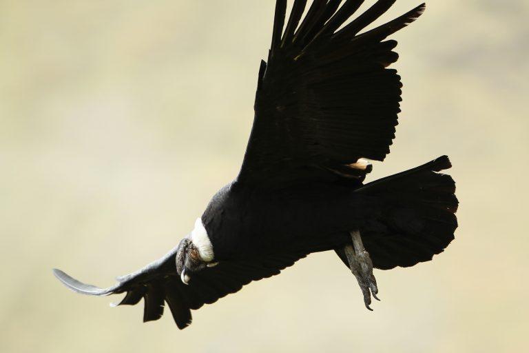 En total fueron quince salidas de campo para recorrer hábitats muy diferentes. Foto: WCS.