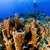 La administración de la nueva área protegida estará a cargo de un consejo directivo compuesto por seis representantes del pueblo Rapa Nui y cinco del gobierno chileno. Foto: Gobernación Isla de Pascua.