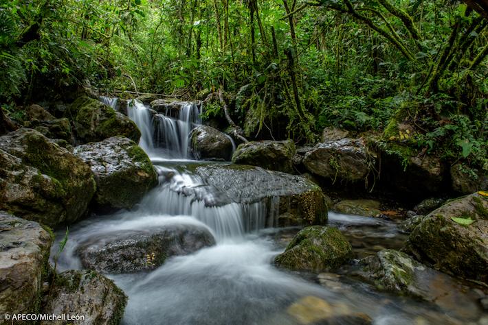 La ACR Vista alegre-ocia funciona como un corredor biológico que permite el flujo de especies entre dos áreas protegidas. Foto: Michell León-Apeco.