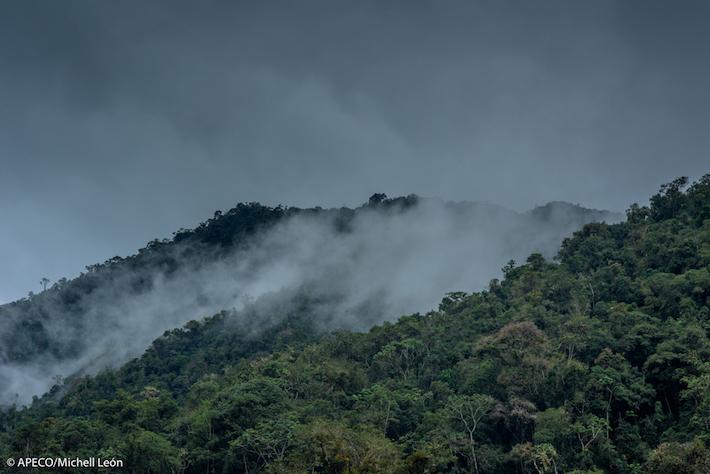 Una muestra representativa de los bosques húmedos bajo montanos de Amazonas está protegida. Foto: Michell León-Apeco.