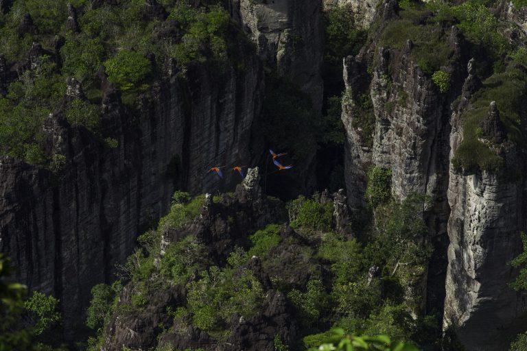 Chiribiquete es un Área importante para la conservación de las aves (AICA). Foto: Parques Nacionales