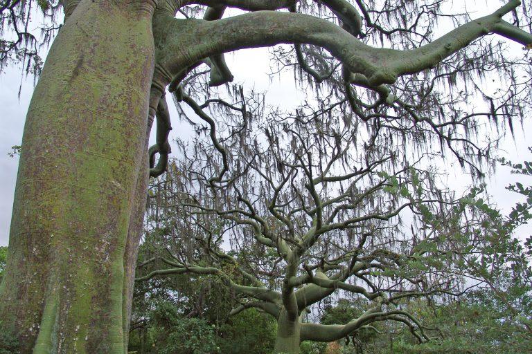 Árboles nativos del bosque seco. Foto: Naturaleza y Cultura Internacional.