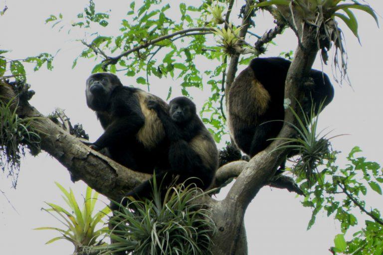 El bosque seco alberga una enorme variedad de fauna. Foto: Naturaleza y Cultura Internacional.