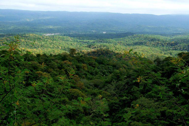 Bosque seco en la reserva de Cazaderos en el sur de Ecuador. Foto: Naturaleza y Cultura Internacional.