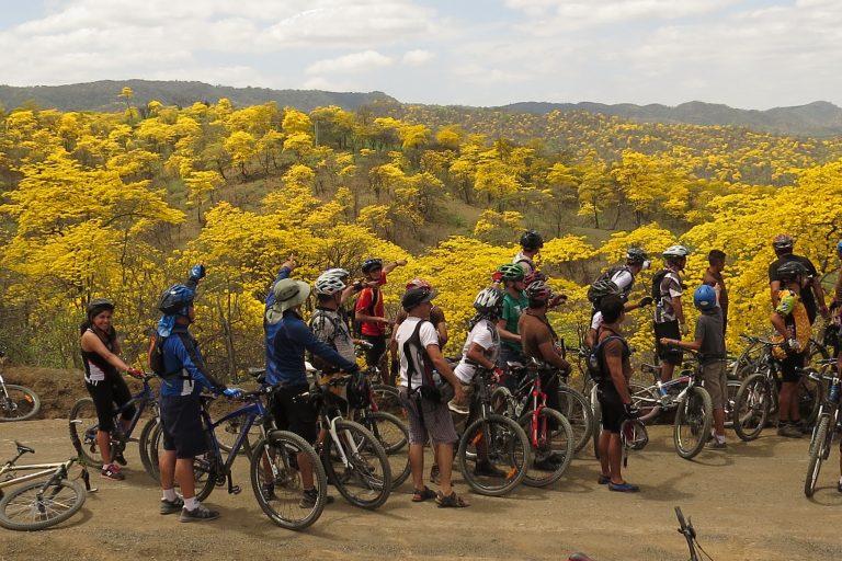 Turistas observan la belleza de los guayacanes florecidos en el bosque seco ecuatoriano. Foto: Charles Smith, Naturaleza y Cultura Internacional.