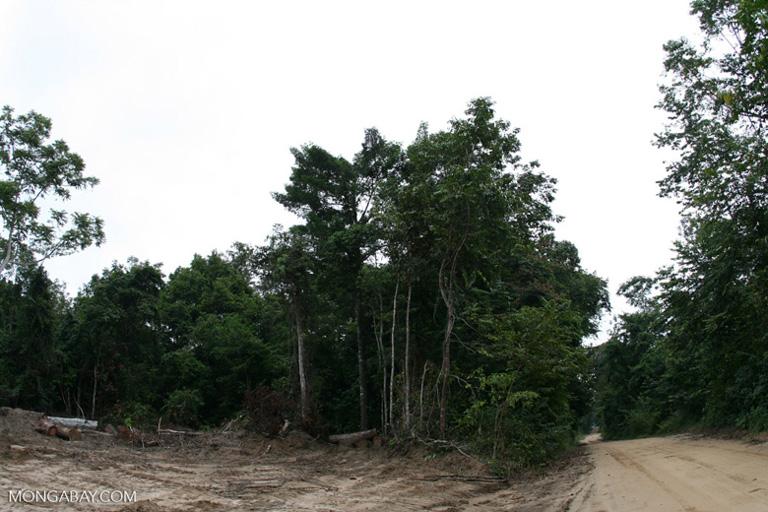 Un camino de tala y deforestación en Gabón. Foto por Rhett A. Butler/Mongabay.
