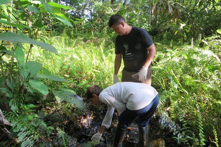 Esta es una de las zonas donde el crudo solidificado de las operaciones de Texaco había quedado oculto bajo la vegetación. Foto: Unión de Afectados por la Petrolera Chevron (Udapt).