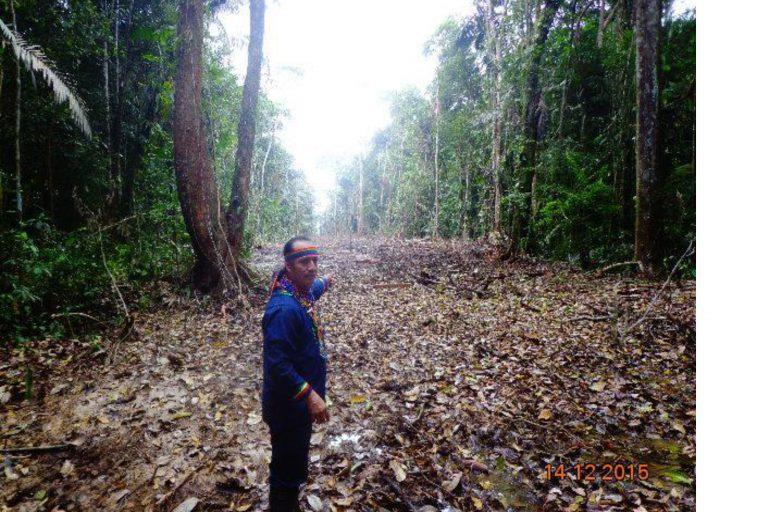 Este camino en territorio Siona de San José de Wisuyá en Ecuador fue talado por empresas petroleras que no contaban con una licencia ambiental. Foto: Foto: Alonso Aguinda.