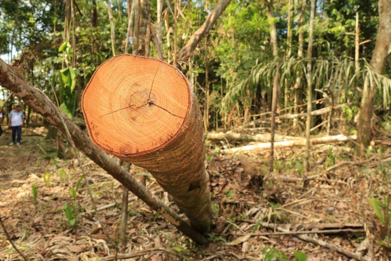 El Ideam reveló que, solo en los primeros tres meses de 2018, el Parque Tinigua perdió más de 5600 hectáreas de bosque por causa de la deforestación. Foto: Cormacarena.
