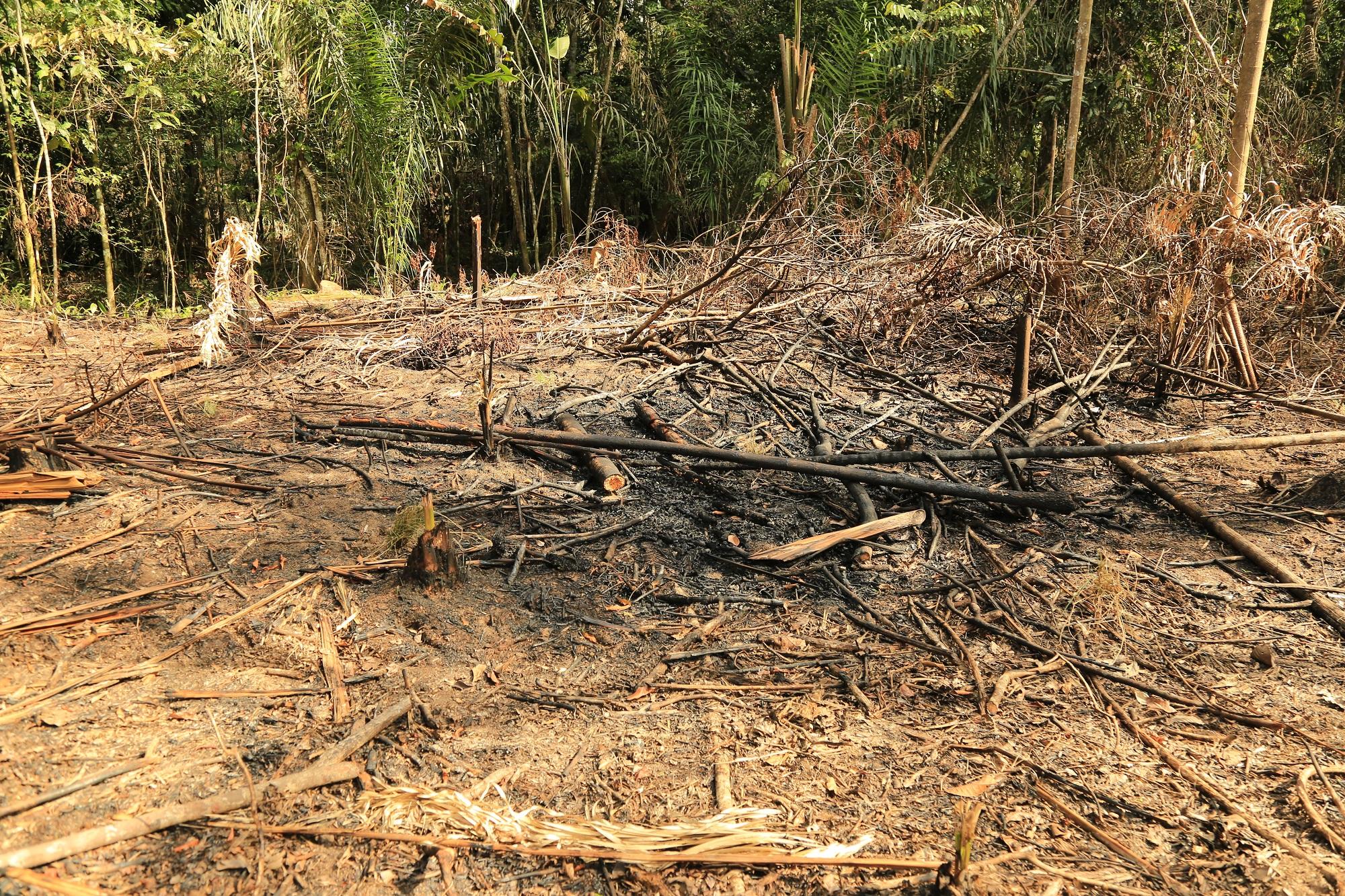 Los taladores suelen tumbar bosque y quemar la madera en época de verano. Por ahora llueve en la zona, pero a las autoridades les preocupa la pequeña estación seca de agosto. Foto: Cormacarena.